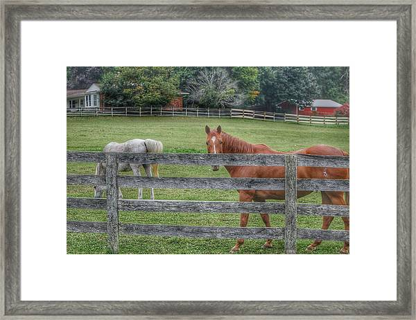 1007 - Here's Looking At You Framed Print