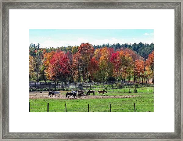 Heritage Farm In Easthampton, Ma Framed Print