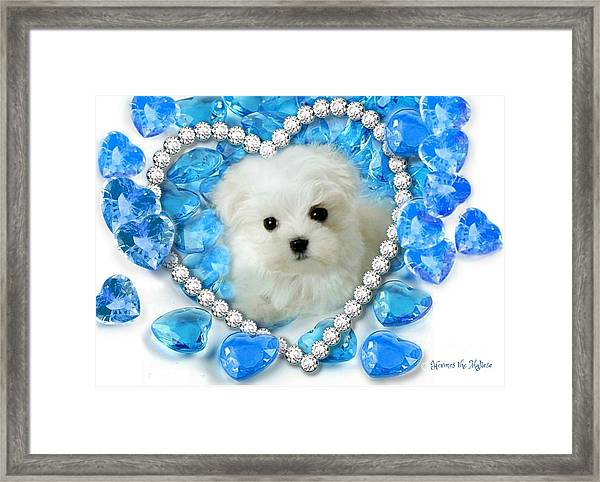 Hermes The Maltese And Blue Hearts Framed Print