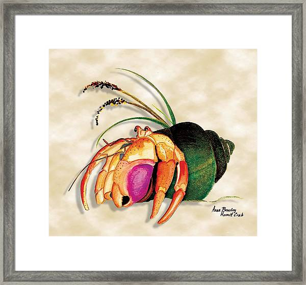 Hermit Crab In Green Shell Framed Print