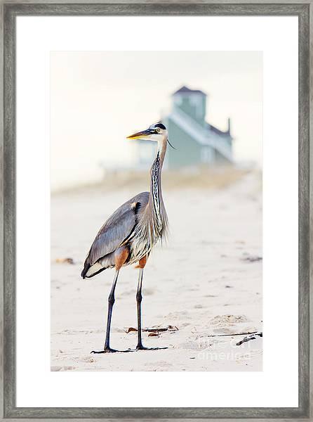 Heron And The Beach House Framed Print
