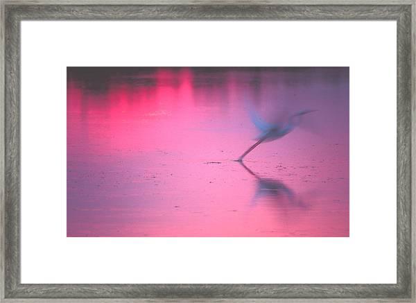 Heron At Sunset Framed Print