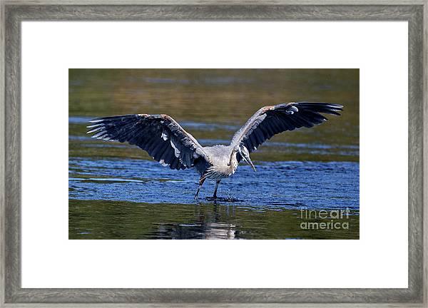 Heron Full Spread Framed Print