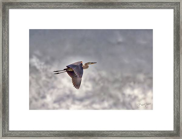Framed Print featuring the photograph Heron In The Storm by David A Lane