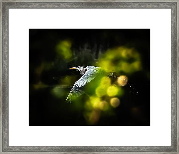 Heron Launch Framed Print