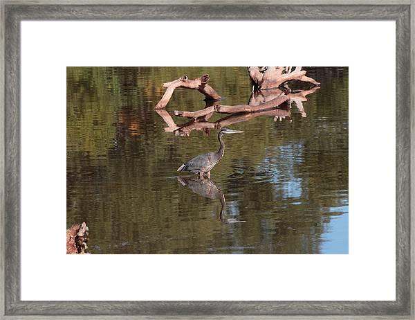 Heron Reflection Framed Print