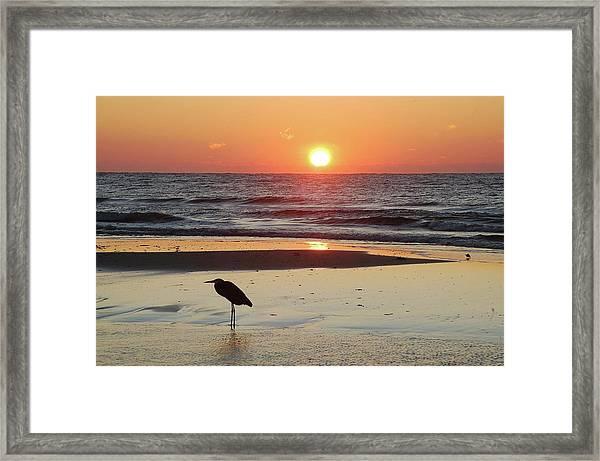 Heron Watching Sunrise Framed Print