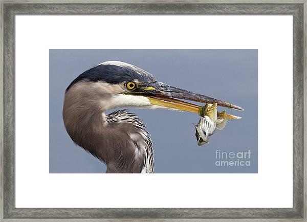 Herons Appetizer Framed Print