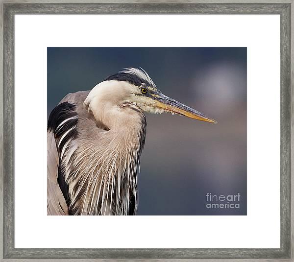 Herons Pause Framed Print