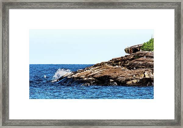 Herring Gull Picnic Framed Print