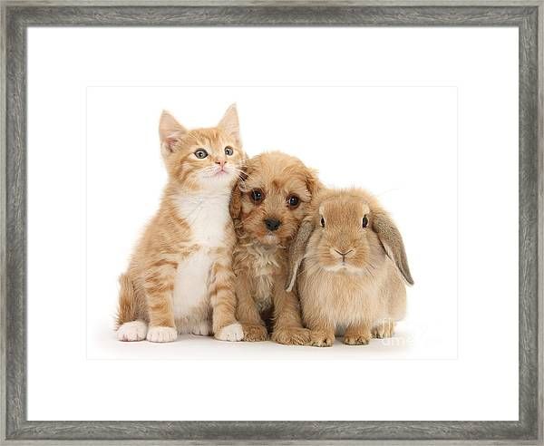 Hey, Move Over, You're Upstaging Me Framed Print