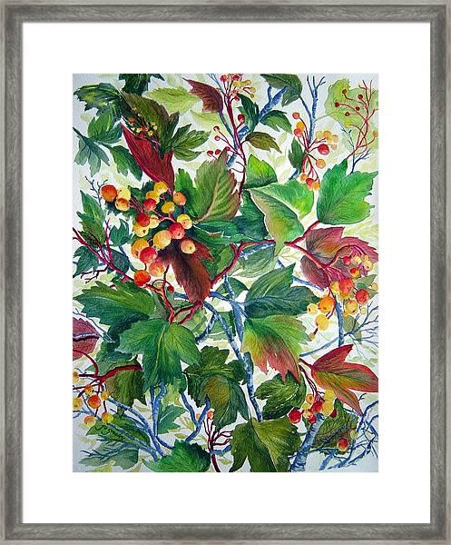 Hi-bush Cranberries Framed Print