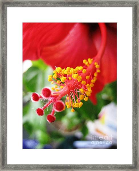 Hibiscus #3 Framed Print
