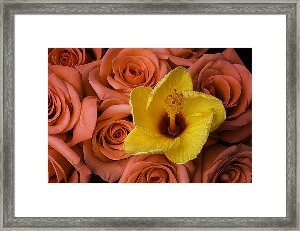 Hibiscus And Roses Framed Print