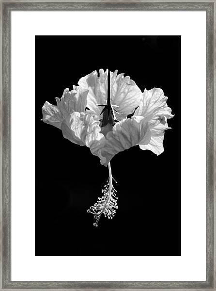 Hibiscus As Art 2 Framed Print