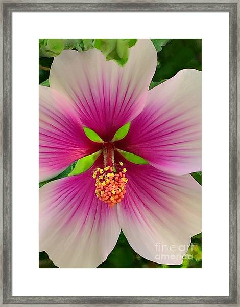 Hibiscus Face Framed Print