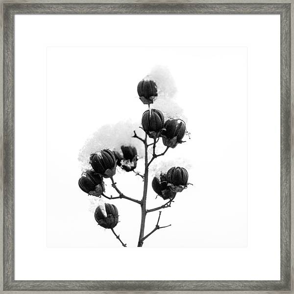Hickory Tree In Winter Framed Print