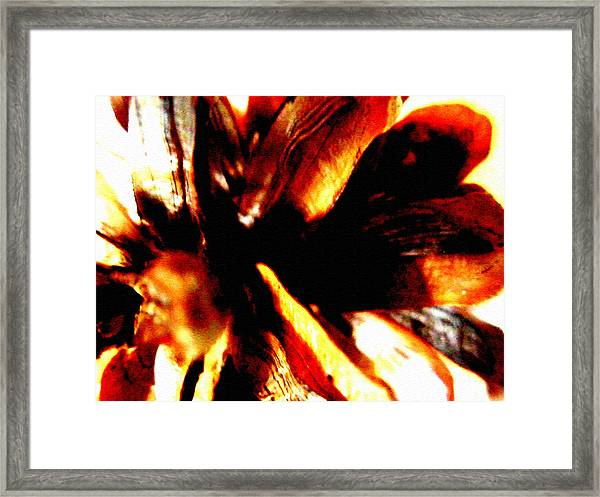 Hidden Image In Abstract Pinecone Framed Print