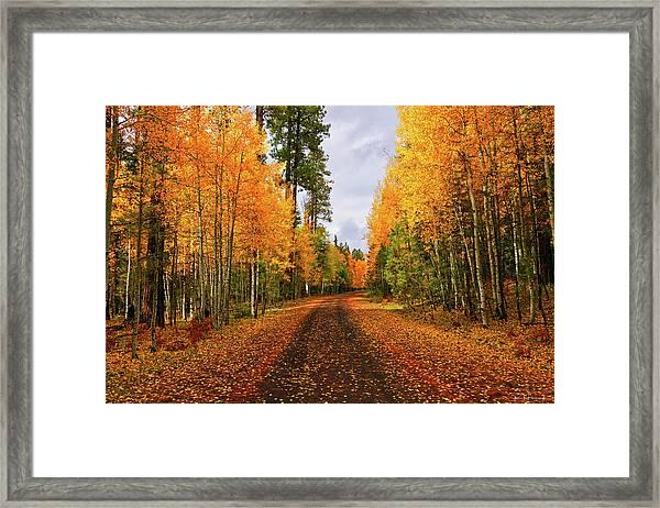 Hidden Paths Framed Print