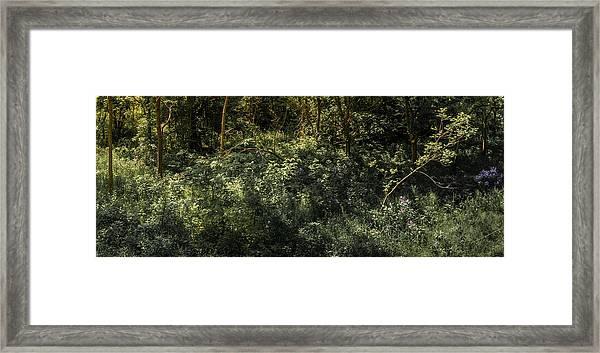 Hidden Wildflowers Framed Print