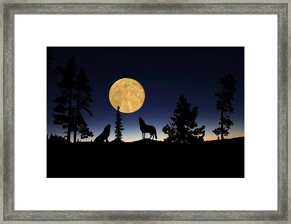 Hidden Wolves Framed Print