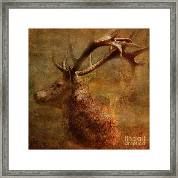 Hide And Seek 2015 Framed Print