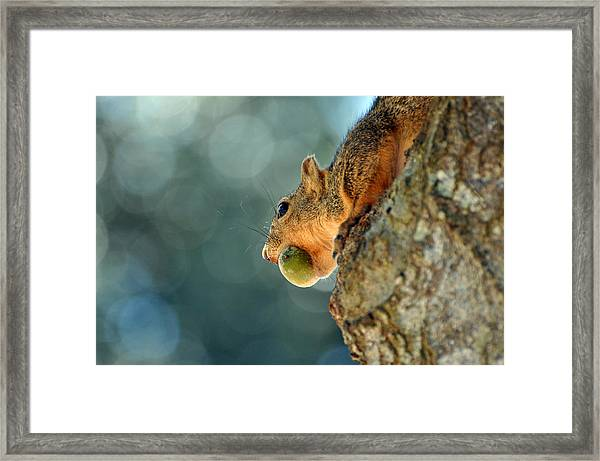Hiding Dinner Framed Print by Teresa Blanton