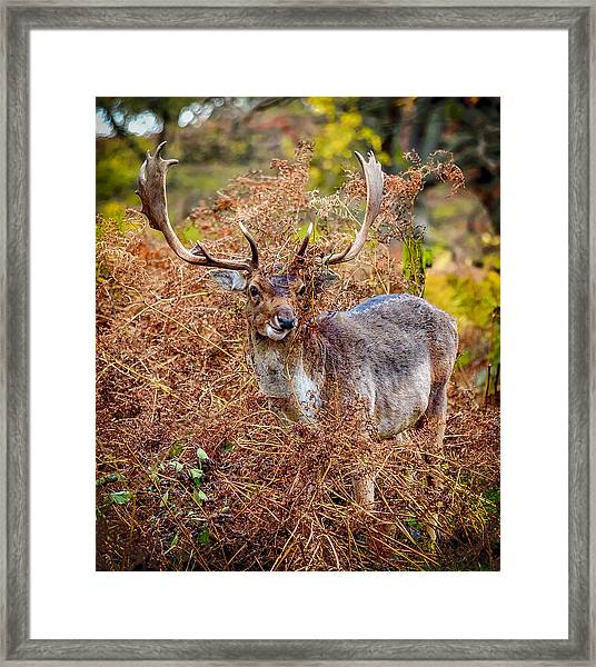 Framed Print featuring the photograph Hiding In The Bracken by Nick Bywater