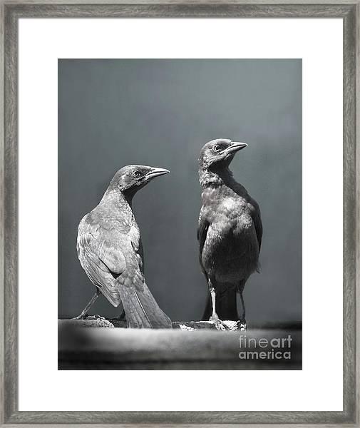 High Alert Framed Print by Jan Piller