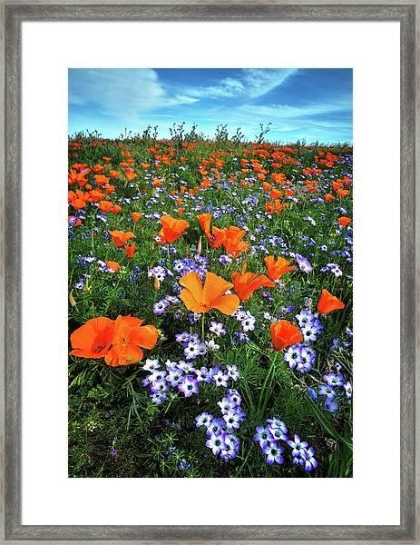 High Desert Wildflowers Framed Print