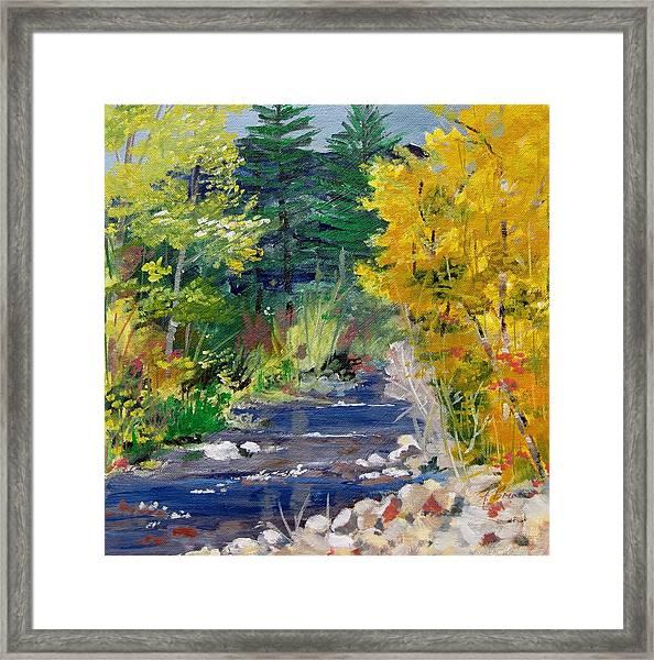 High Mountain Creek  Framed Print