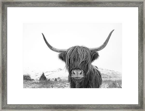 Highland Cow Mono Framed Print