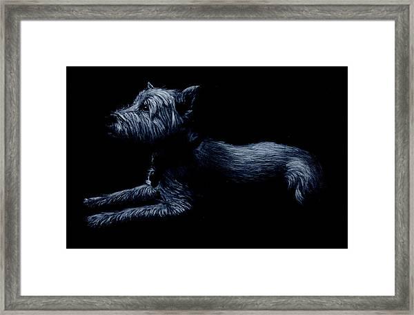 Highland Terrier Framed Print