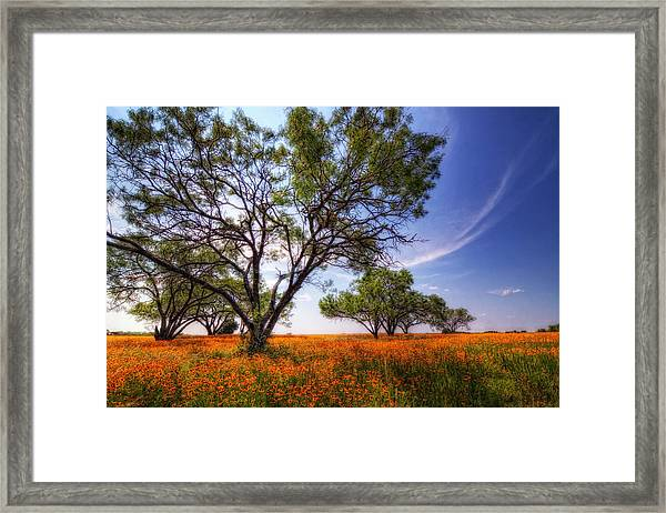 Hill Country Spring Framed Print