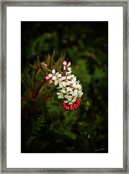 Hillside Surprise Framed Print