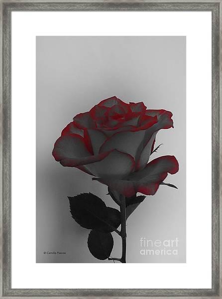 Hints Of Red- Single Rose Framed Print