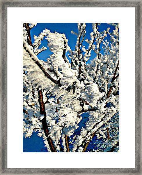 Hoar Frost Framed Print