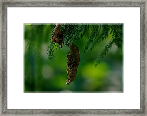 Holding Onto The Past Framed Print