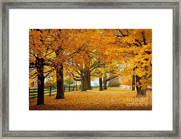 Framed Print featuring the photograph Hollis Farm by Susan Cole Kelly