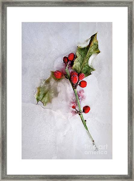 Holly 2 Framed Print