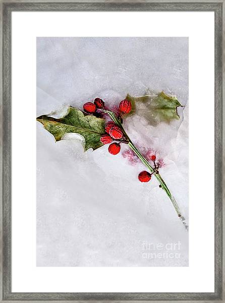 Holly 3 Framed Print
