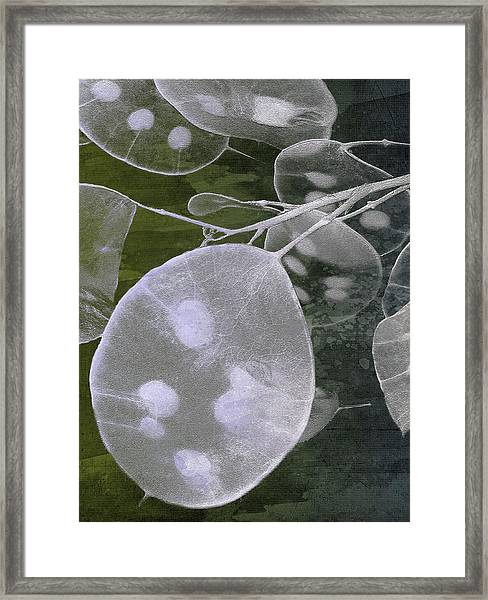 Honesty V Framed Print