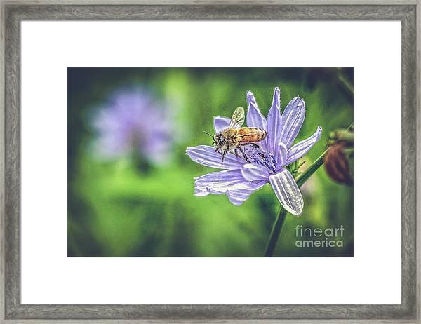 Honey Bee And Flower Framed Print