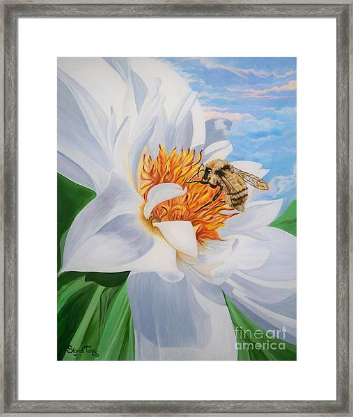 Flygende Lammet Productions     Honey Bee On White Flower Framed Print