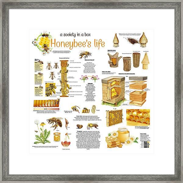 Honey Bees Infographic Framed Print
