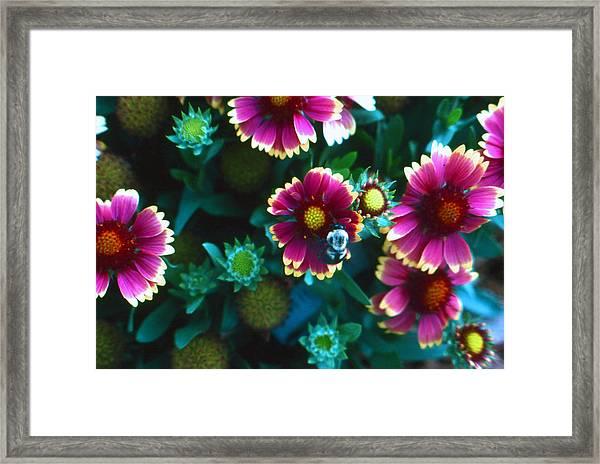 Honeybee And Flowers Framed Print