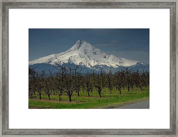 Hood Orchard Framed Print