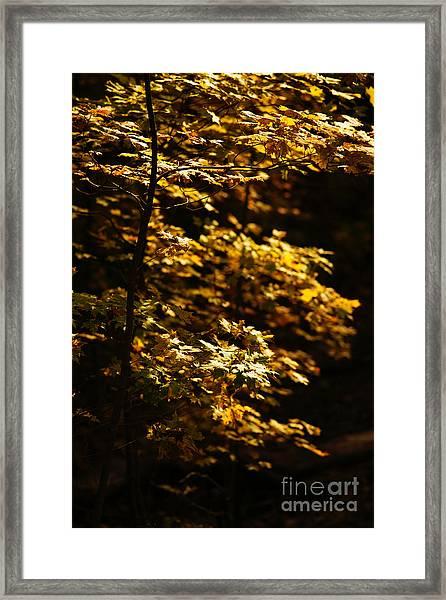Hope Leaves Framed Print