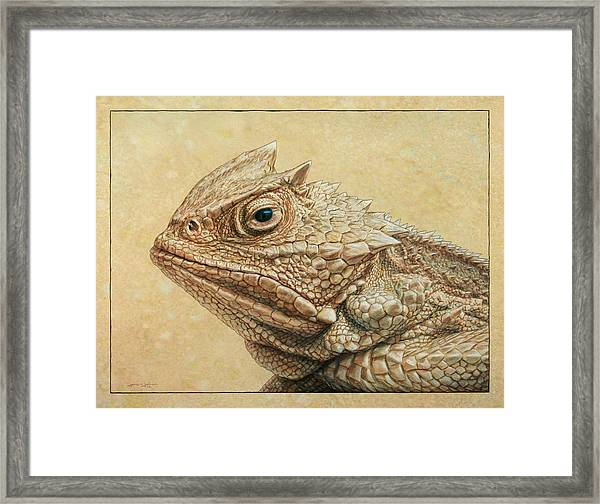 Horned Toad Framed Print