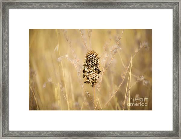 Hornets Nest Framed Print